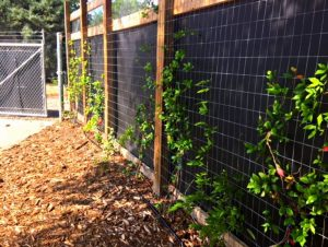 Botanic Garden at Georgia Southern University found a solution to the city traffic and road noise by installing an outdoor noise reducing barrier.